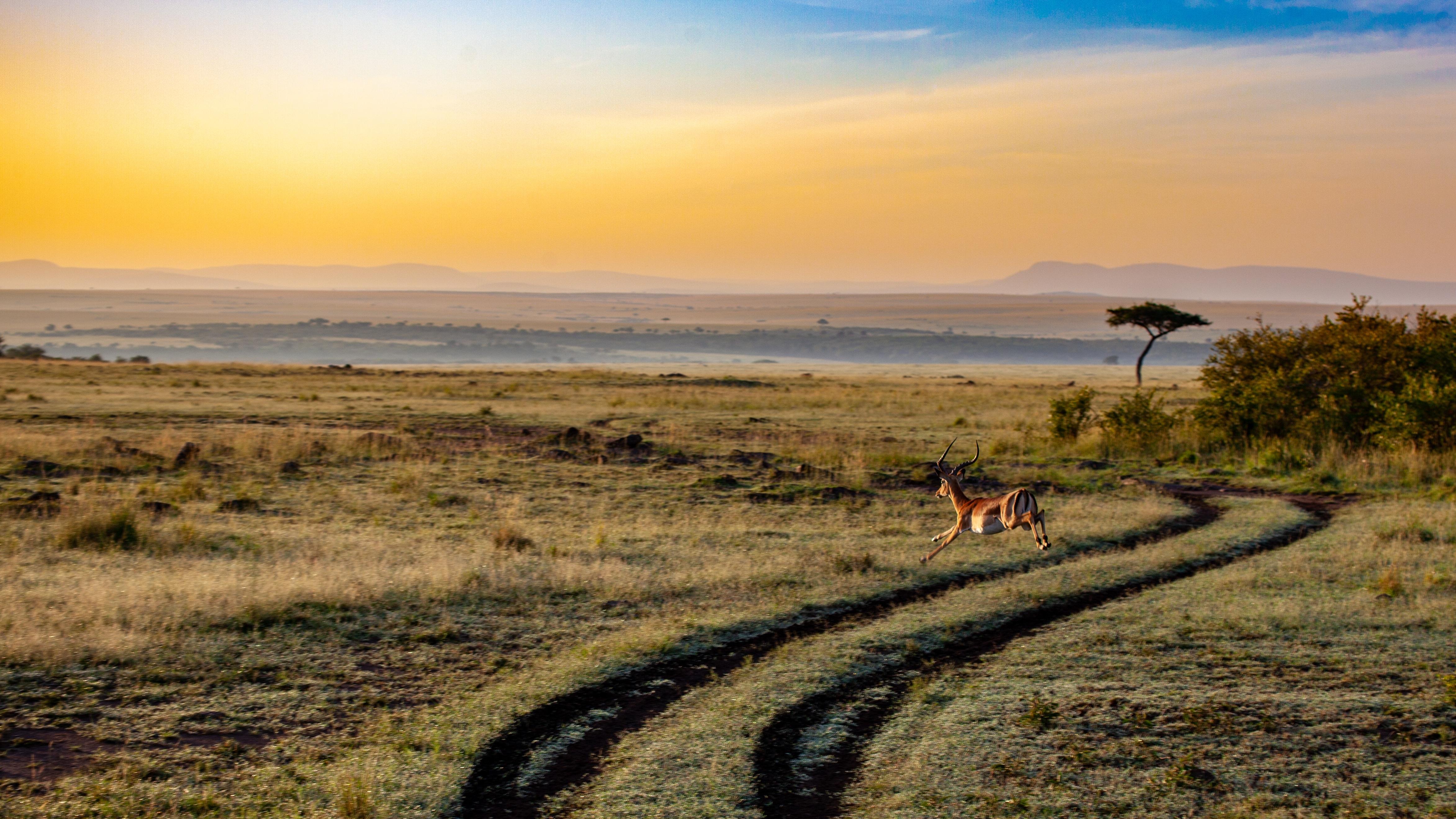 antilope sur une route de safari
