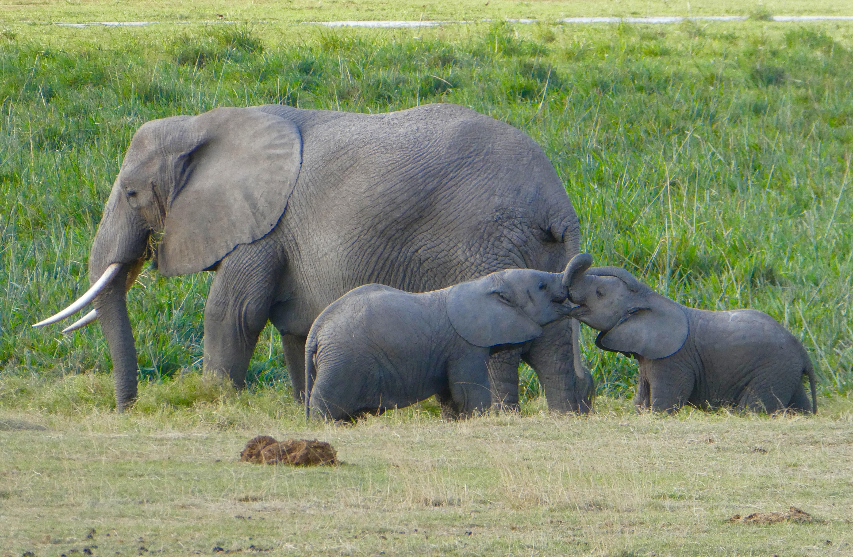 elephants dans un parc