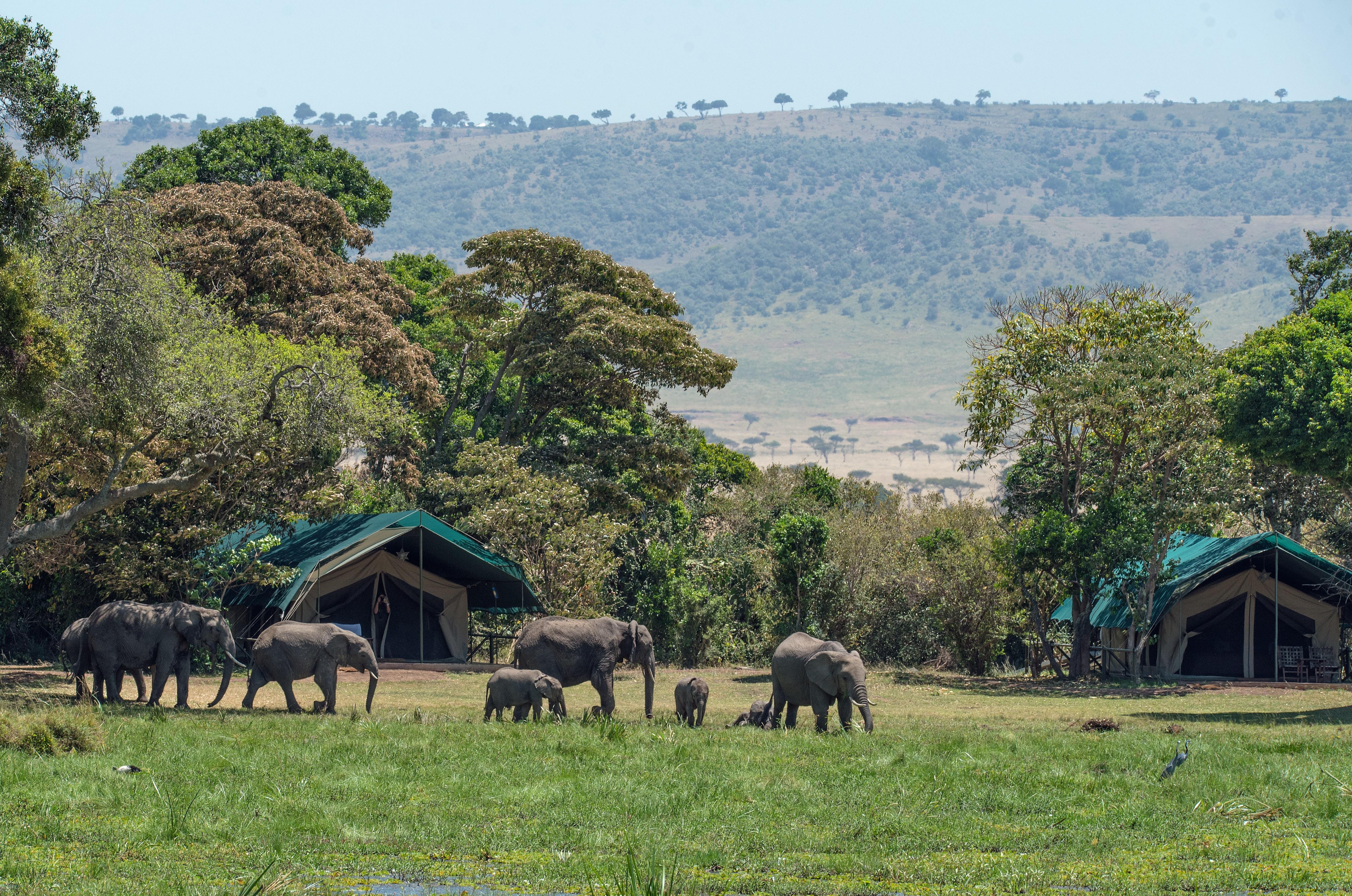 hotel au masai-mara